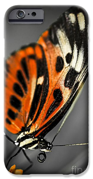 Large Tiger Butterfly IPhone Case by Elena Elisseeva