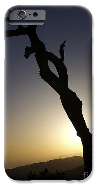 New Photographic Art Print For Sale Joshua Tree At Sunset IPhone Case by Toula Mavridou-Messer