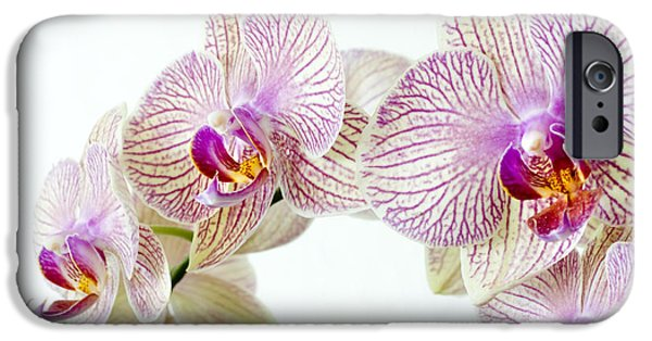 Phalaenopsis Orchid Phalaenopsis Sp IPhone 6s Case by Lawrence Lawry