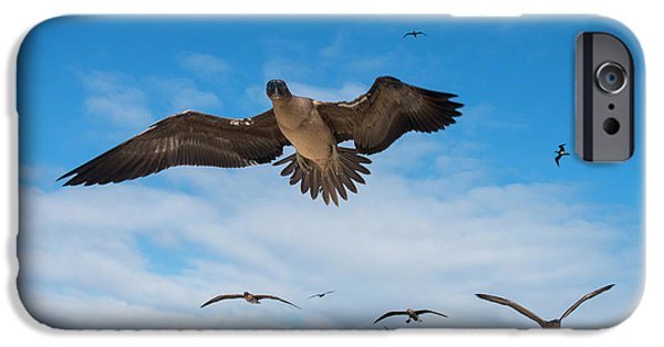 Red-footed Booby (sula Sula Websteri IPhone 6s Case by Pete Oxford