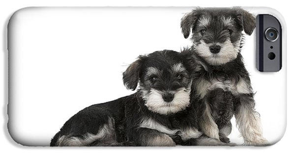 Schnauzer Puppy Dogs IPhone Case by John Daniels