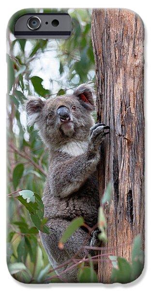 Koala (phascolarctos Cinereus IPhone 6s Case by Martin Zwick