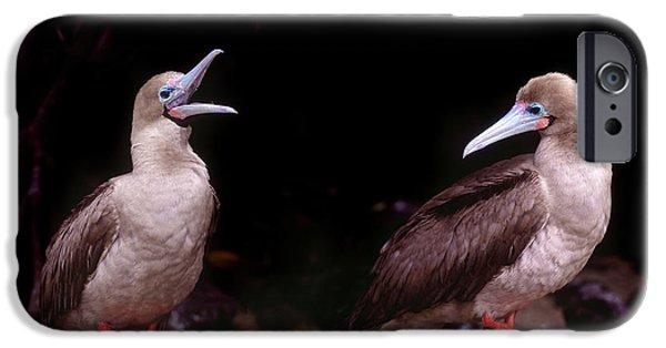 South America, Ecuador, Galapagos IPhone 6s Case by Jaynes Gallery