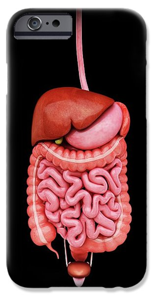 Human Internal Organs IPhone Case by Pixologicstudio