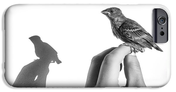 A Bird On The Hand IPhone Case by Caitlyn  Grasso