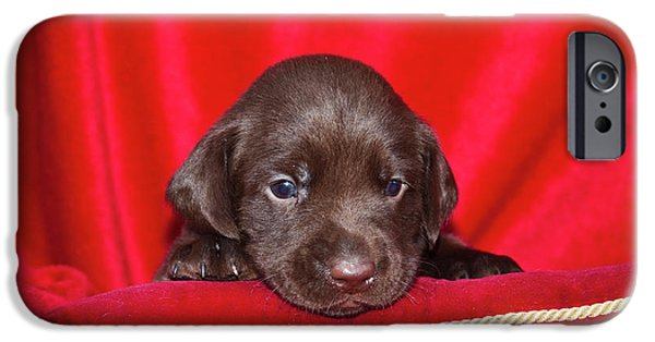 A Chocolate Labrador Retriever Puppy IPhone Case by Zandria Muench Beraldo