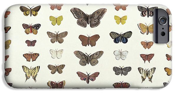 A Collage Of Butterflies And Moths IPhone Case by French School