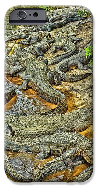 A Congregation Of Alligators IPhone 6s Case by Rona Schwarz
