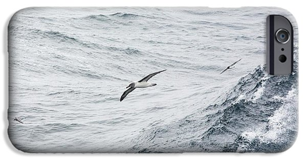 A Grey Headed Albatross IPhone 6s Case by Ashley Cooper