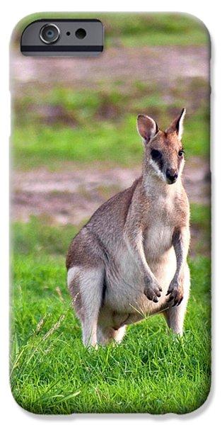 A Male Grey Kangaroos (macropus IPhone Case by Miva Stock