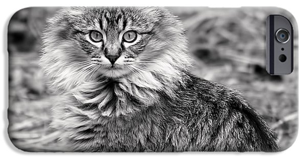 A Young Maine Coon IPhone Case by Rona Black