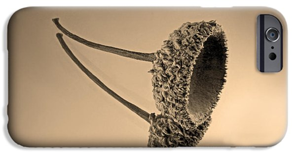 Acorn IPhone Case by Don Spenner
