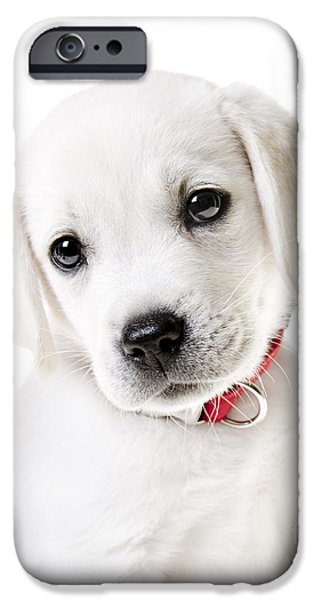 Adorable Yellow Lab Puppy IPhone Case by Diane Diederich
