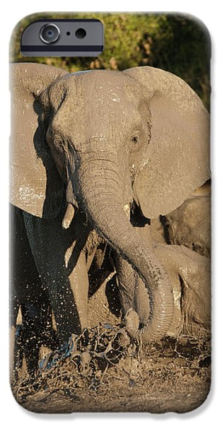 Africa, Botswana, Chobe National Park IPhone Case by Joe and Mary Ann Mcdonald