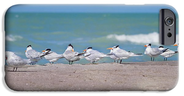 All In A Row IPhone Case by Kim Hojnacki