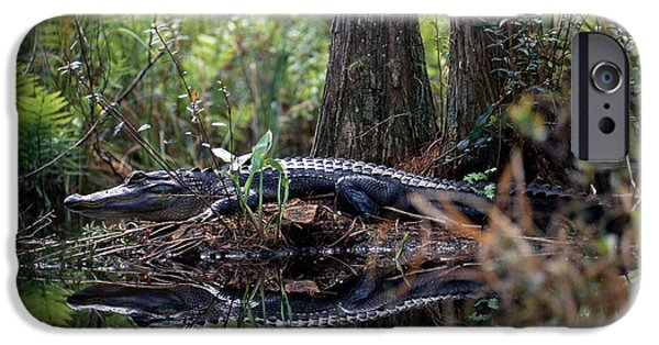 Alligator In Okefenokee Swamp IPhone 6s Case by William H. Mullins