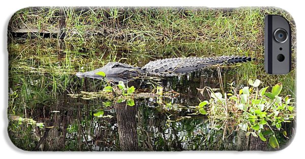 Alligator In Swamp IPhone 6s Case by Jim West