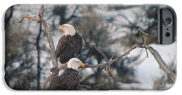 An Eagle Pair  IPhone Case by Jeff Swan