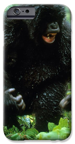 Angry Mountain Gorilla IPhone 6s Case by Art Wolfe