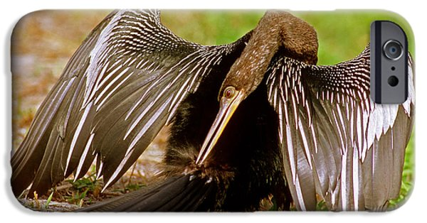 Anhinga Anhinga Anhinga Preening IPhone 6s Case by Millard H. Sharp