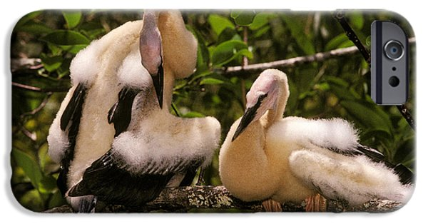 Anhinga Chicks IPhone 6s Case by Ron Sanford