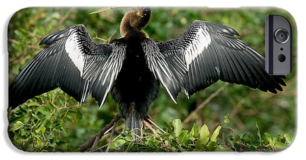 Anhinga Sunning IPhone 6s Case by Anthony Mercieca