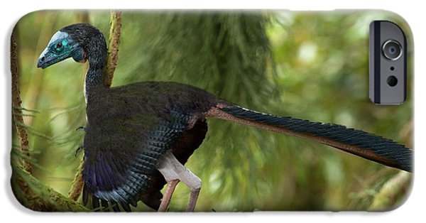 Archaeopteryx Photographic Reconstruction IPhone Case by Paul D Stewart