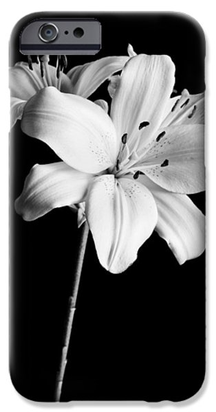 Asian Lilies 2 IPhone Case by Sebastian Musial