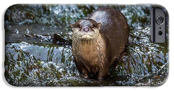 Asian Small-clawed Otter IPhone 6s Case by Paul Williams