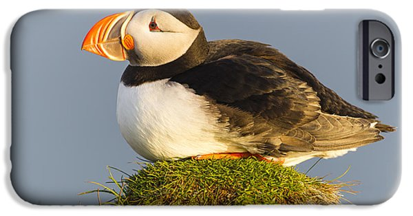 Atlantic Puffin Iceland IPhone 6s Case by Peer von Wahl