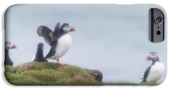 Atlantic Puffins Fratercula Arctica IPhone 6s Case by Panoramic Images