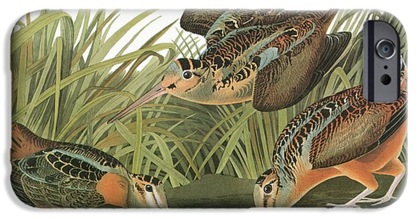 Audubon Woodcock IPhone 6s Case by Granger