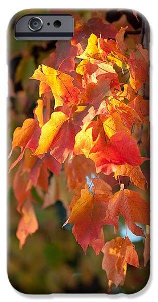 Autumn IPhone Case by Sebastian Musial