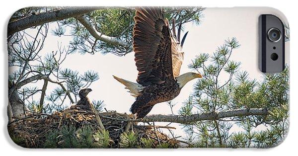 Bald Eagle With Eaglet IPhone Case by Everet Regal
