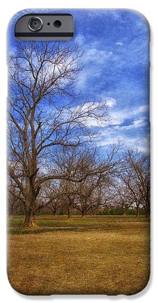 Bare Pecan Trees IPhone Case by Kim Hojnacki