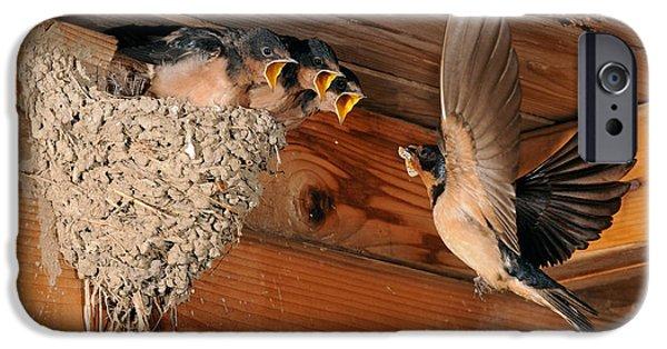 Barn Swallow Nest IPhone Case by Scott Linstead