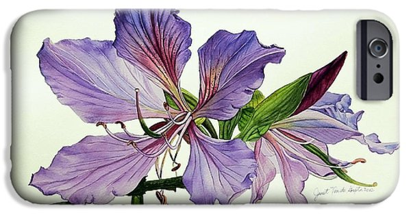 Bauhinia Botanical Painting IPhone Case by Janet Pancho Gupta