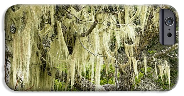 Beard Lichen Growing On Shore Pine IPhone Case by Bob Gibbons