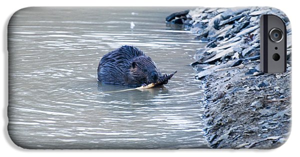Beaver Chews On Stick IPhone 6s Case by Chris Flees