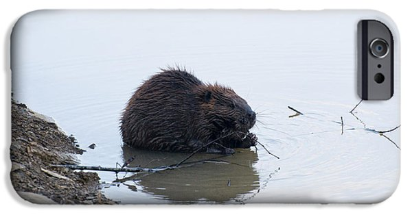 Beaver In The Shallows IPhone 6s Case by Chris Flees