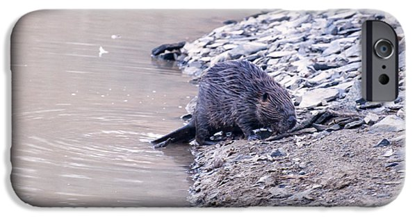 Beaver On Dry Land IPhone Case by Chris Flees