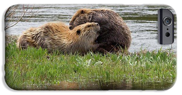 Beaver Pair Grooming One Another IPhone 6s Case by Ken Archer