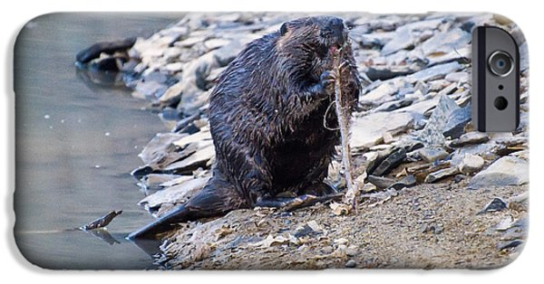Beaver Sharpens Stick IPhone 6s Case by Chris Flees