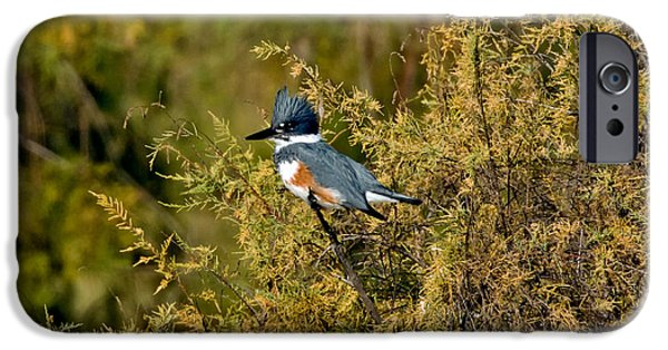 Belted Kingfisher Female IPhone 6s Case by Anthony Mercieca