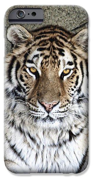 Bengal Tiger Vertical Portrait IPhone Case by Tom Mc Nemar