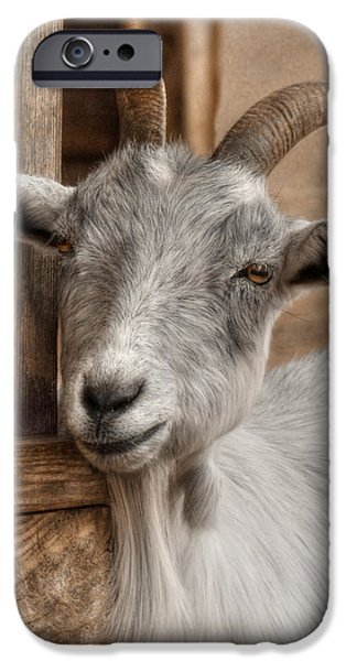 Billy Goat IPhone 6s Case by Lori Deiter