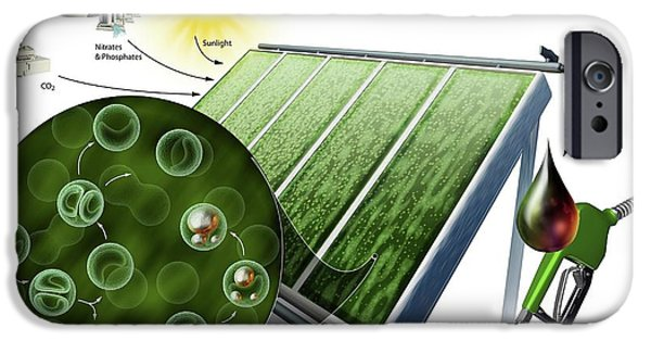 Biofuel From Algae IPhone Case by Nicolle R. Fuller
