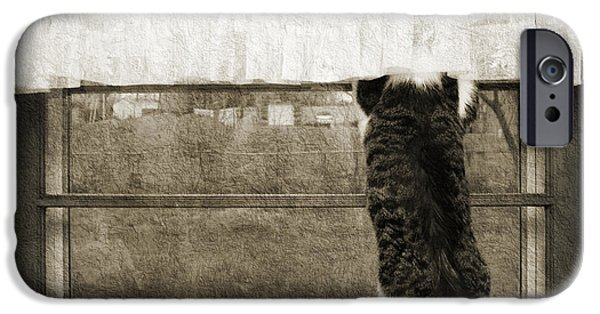 Bird Watching Kitty Cat Bw IPhone Case by Andee Design