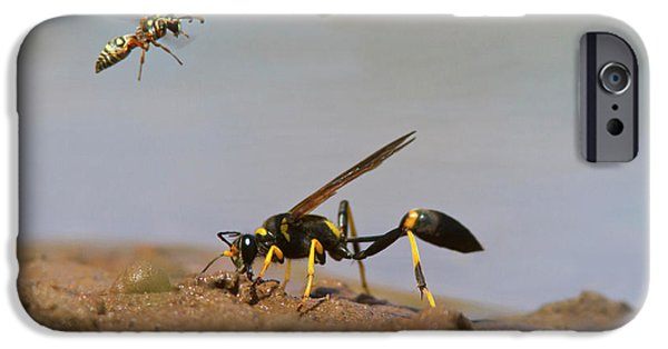 Black-and-yellow Mud Dauber (sceliphron IPhone Case by Larry Ditto