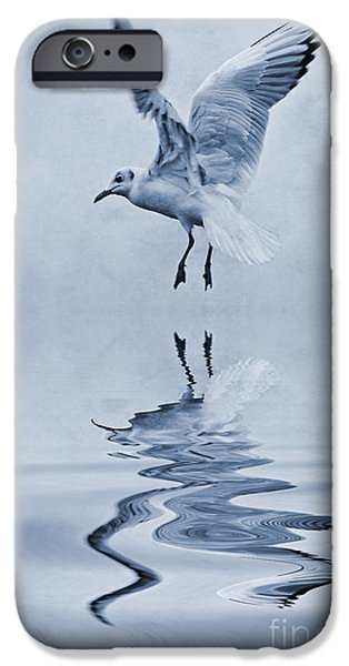 Black Headed Gull Cyanotype IPhone Case by John Edwards